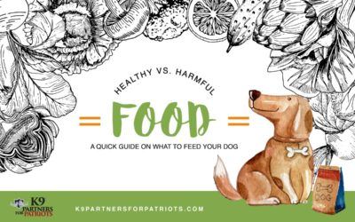 Healthy vs Harmful Food & Treats for Your Dog