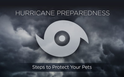 Protect Your Pets! Take These Steps to Hurricane Preparedness