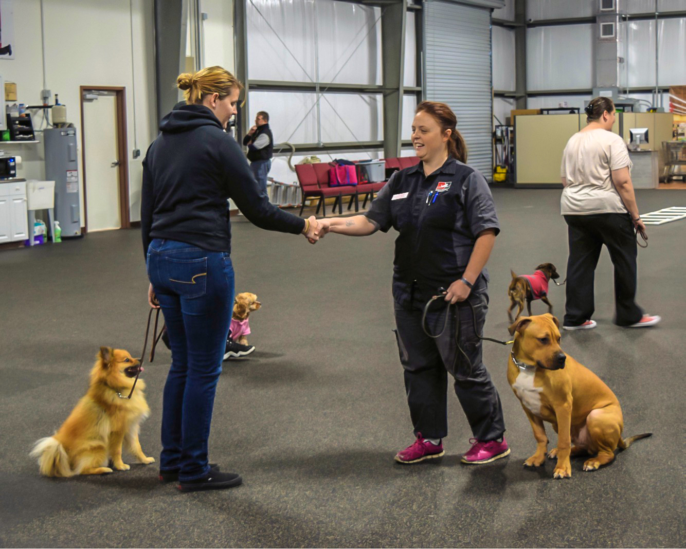 how to become a certified service dog trainer
