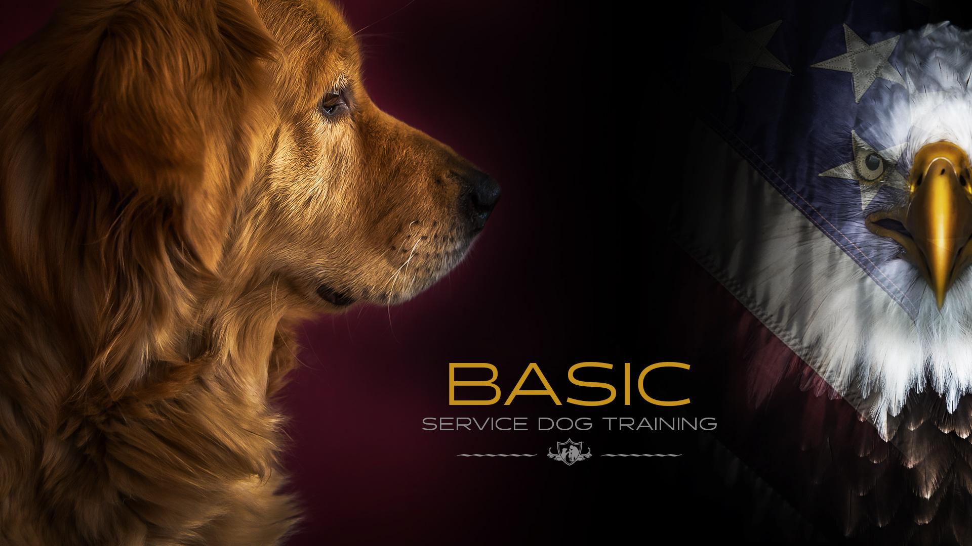 Service Dog Training Program For Veterans K9 Partners For Patriots