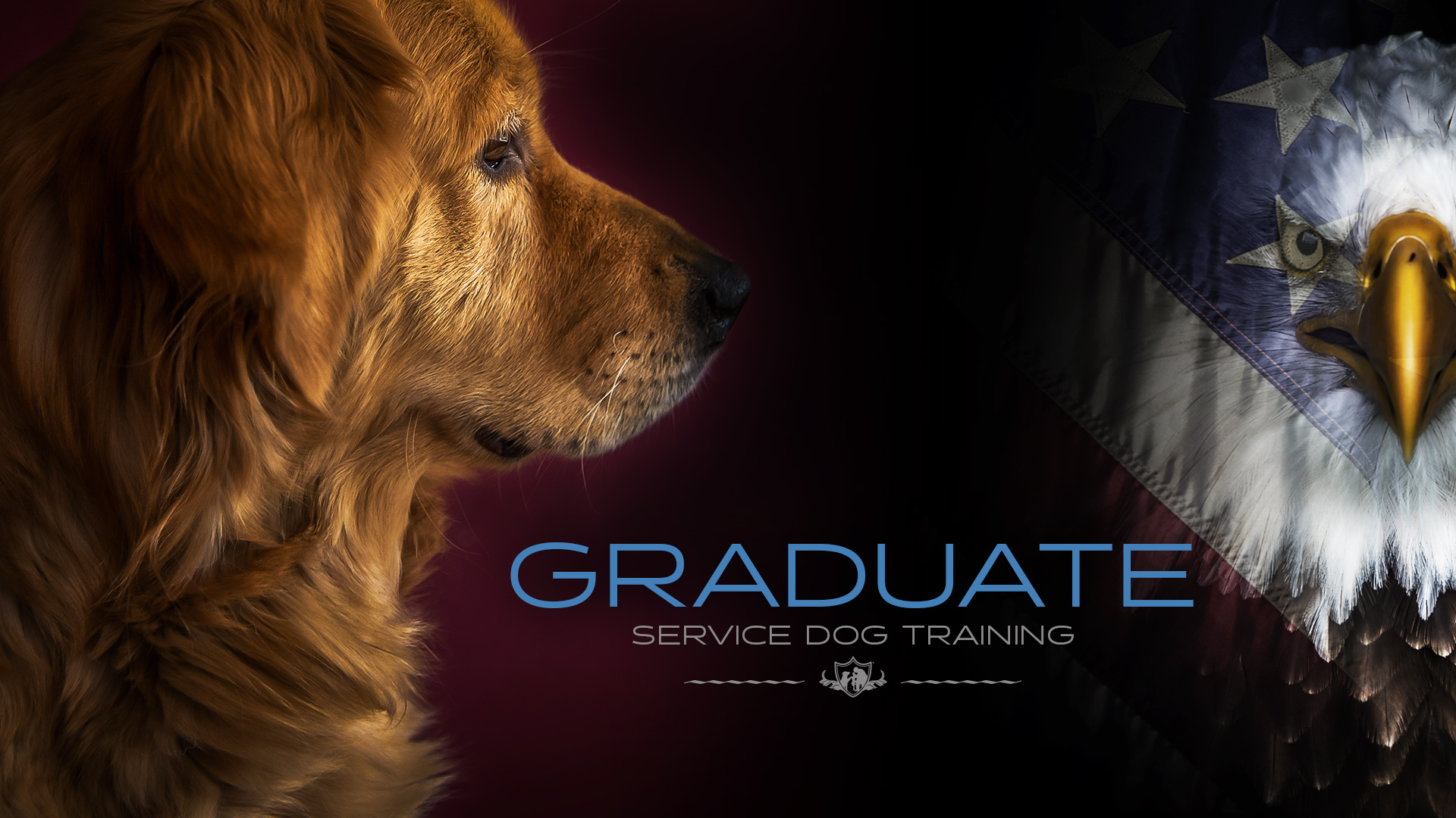 Service dog training 101: everything you need to know.