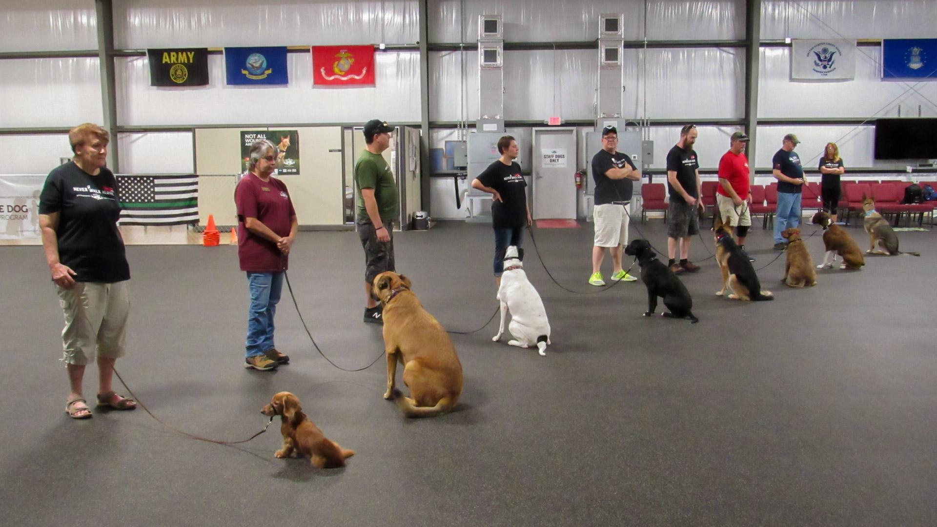 Service Dog Training Program for Veterans - K9 Partners for